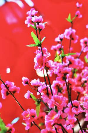 Chinese New Year Peach Blossom Flower Stock Photo