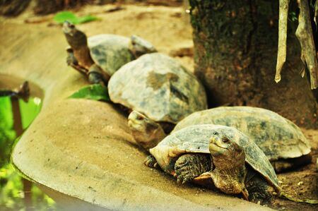 Tortoise in a row Stock Photo