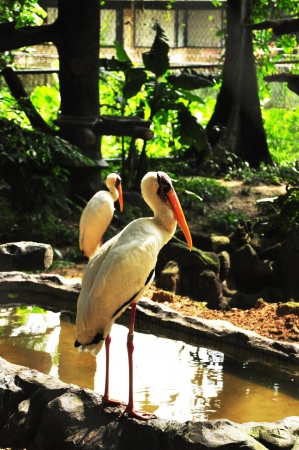 Stork resting at pond side