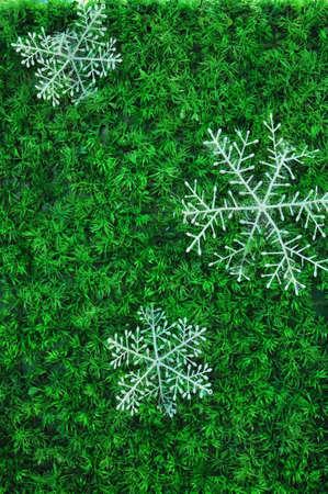 Show flakes on Tree Stock Photo - 16849163