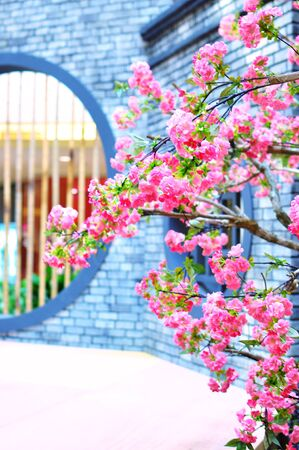 Cherry Blossom Tree with Chinese wall as background Stock Photo