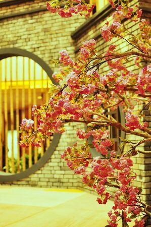 chinese wall: Pink Tree Cherry Blossom con muraglia cinese come sfondo