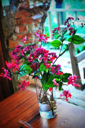 red fresh flowers in a vase Stock Photo
