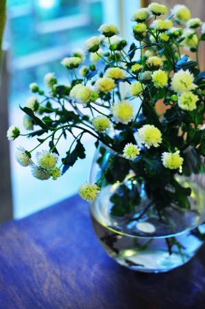 Little white flowers on table