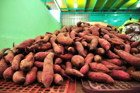 Tapioca Roots for Sale