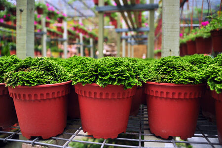 Green Potted Plants For Sale Stock Photo