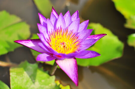 upclose: Upclose photo of Waterlily