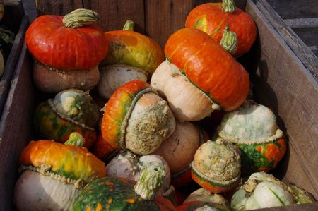 top: Pumpkin top gourds