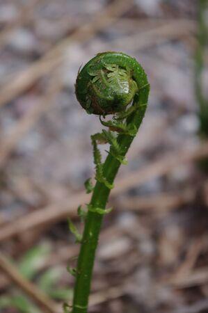 The back of a fern Reklamní fotografie