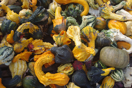 A pile of different kind of fall gourds