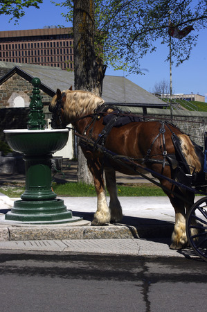 caballo bebe: Caballo Bebida