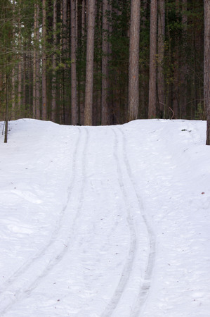 cross country: Cross country ski tracks