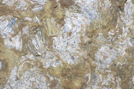 close up of sedimentary rock