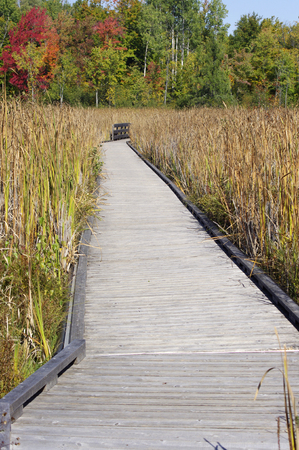 Wooden board walk with fall leaves