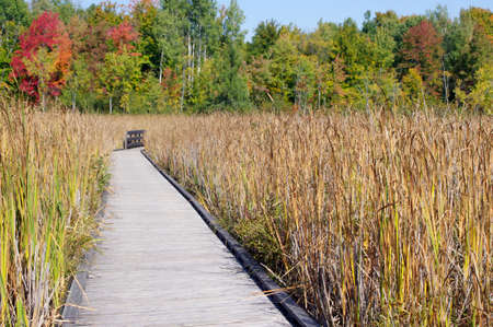 Wooden board walk with fall grass