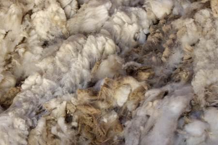 Unprocessed sheep wool texture background Stock Photo