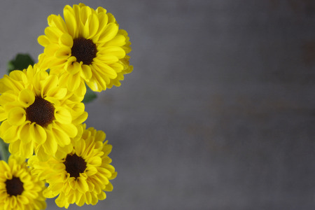 Yellow daisy mums on brown background with copy space
