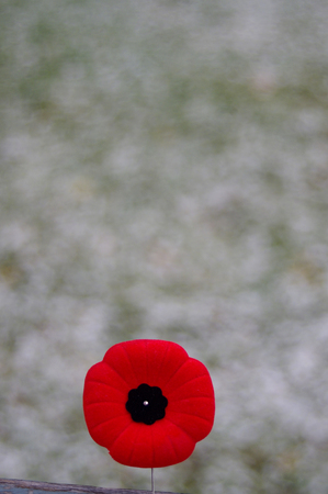 Red poppy pin on spotty snowy background Stock Photo