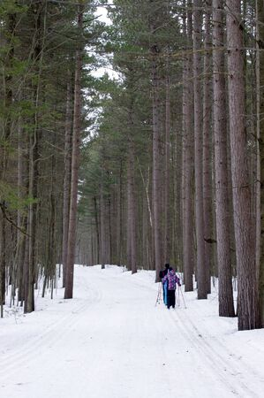 Family cross-country skiing in woods Stock Photo