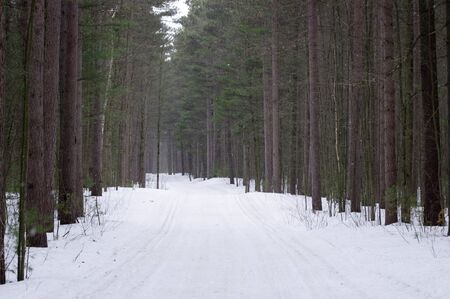 Cross-country ski path in woods Stock Photo