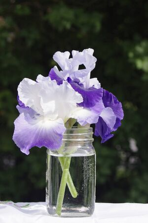 purple irises flowers in mason jar outside in sunshine Stok Fotoğraf - 140648908