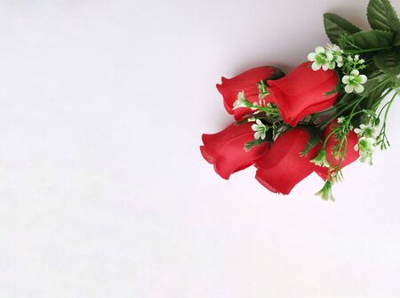 Roses background, gift card; roses on white background