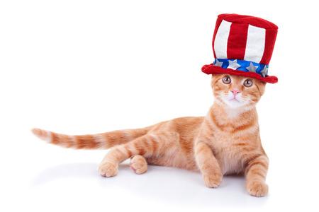 Patriotic cat isolated on white photo