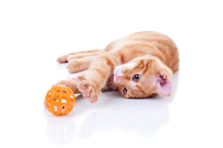 cat stretching: Happy cat playing with toy Stock Photo