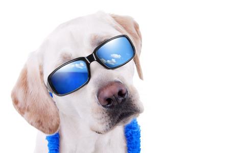 perros vestidos: Perro de vacaciones de vacaciones de verano Foto de archivo