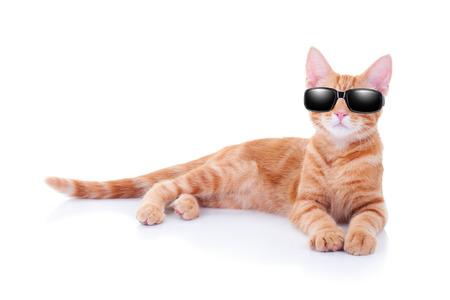 Cat vacaciones de verano o un gato fresco partido en gafas de sol