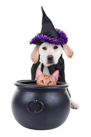 Funny Halloween pets witch dog and cat Stok Fotoğraf