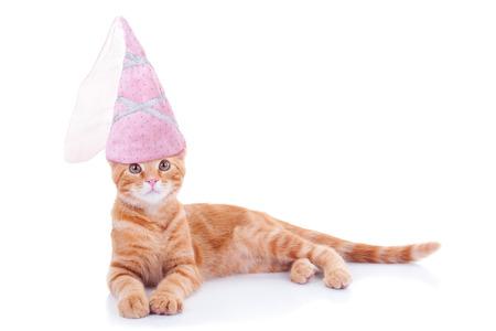 cat grooming: Halloween princess kitten cat in costume