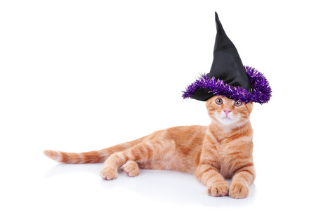 Halloween witch pet cat in costume photo