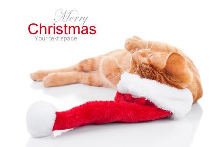 Santa kitten cat dreams of Christmas 版權商用圖片