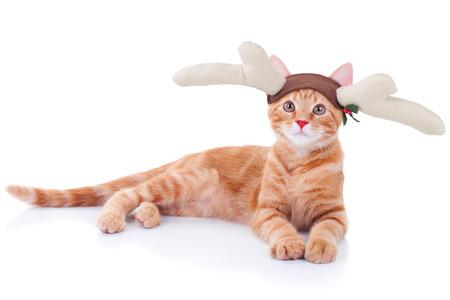 Grappige Kerstmis Rudolph rendier kat