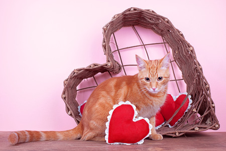pampered pets: Valentine cat with red hearts and heart basket Stock Photo