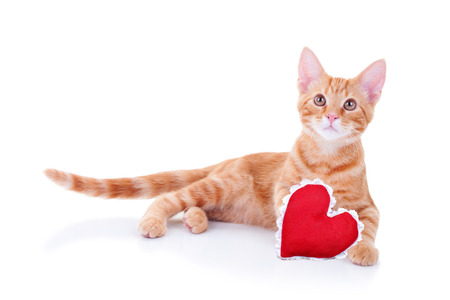 Valentine cat with heart isolated photo