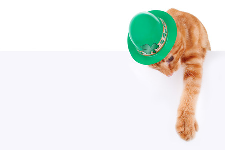 st  patty's: St Patrick s Day cat and sign or banner