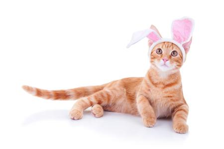 jengibre: Pascua gato mascota conejo en orejas de conejo