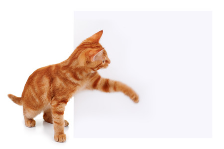 cat stretching: Pet cat swatting at sign. Motion blur on paw to show movement.