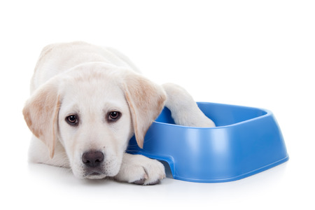 Hungry dog with food bowl. Hunger and nutrition. Stockfoto