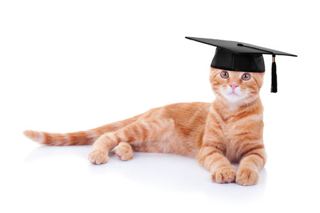 ginger cat: Graduate graduation pet cat in costume Stock Photo