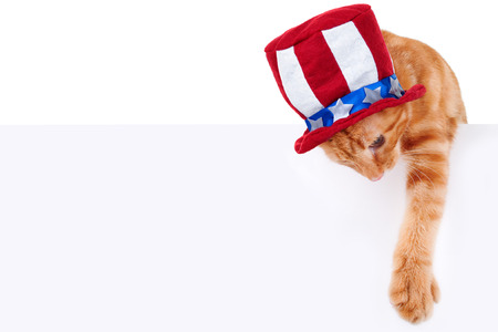 july 4th fourth: Patriotic pet cat holding sign or banner for July 4th Stock Photo