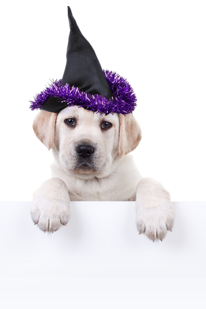 Witch pet dog dressed in Halloween costume holding sign or banner