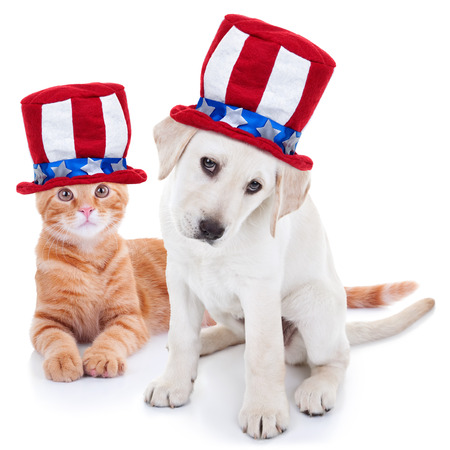 7 月第 4、4、4 の赤白と青のアンクルサム旗帽子身に着けている愛国的な幸せなアメリカ ペット子猫猫と子犬犬の動物アメリカ選挙投票、記念碑と独 写真素材