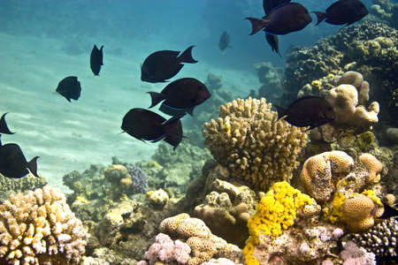 coral and fish photo