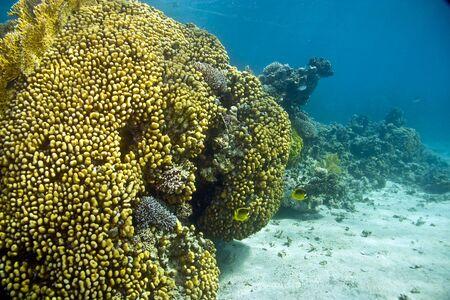 coral and fish photo