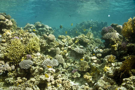 coralgrouper: coral and fish Stock Photo
