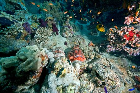 scorpionfish: Smallscale scorpionfish (Scorpaenopsis oxycephala)