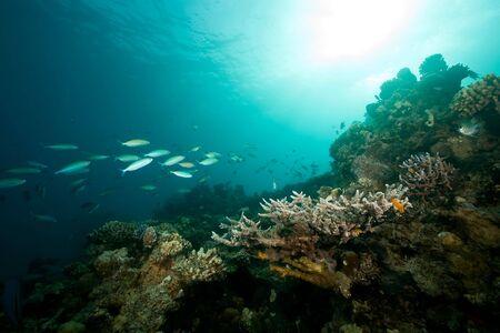 ocean, coral, sun and fish